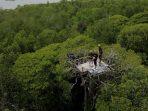 4 Eksoktika Alam di Gonda Mangrove Park