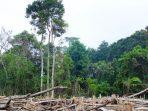 Yayasan Madani: Nol Deforestasi Kunci Strategi Nol Emisi Indonesia