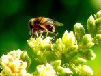 Tanaman bunga dan lebah