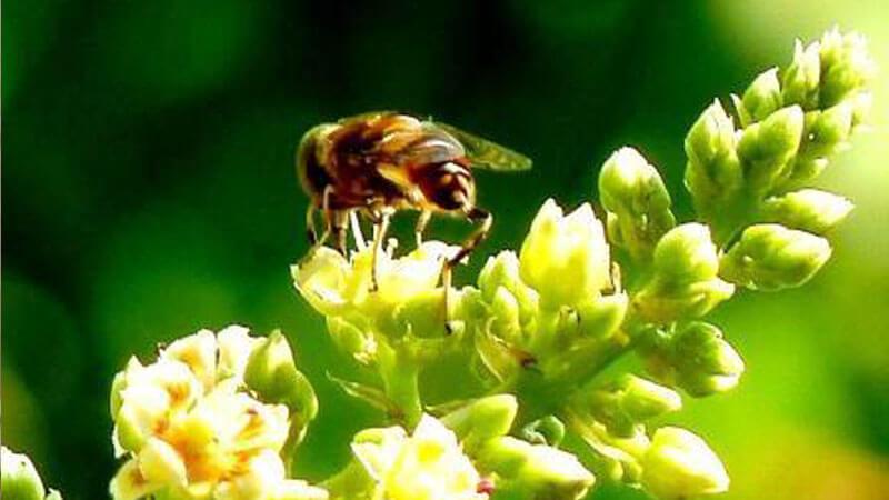 Gambar Ilustrasi Tanaman Bunga Tanaman Bisa Mendengar Dengan Baik Meski Tak Punya Telinga