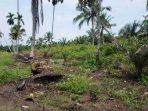 KLHK Siapkan Strategi Pulihkan Ekosistem Gambut Bram Itam Jambi