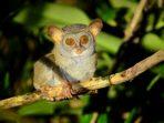 Pernah Dianggap Punah, 6 Satwa Ini Hidup Kembali di Habitatnya