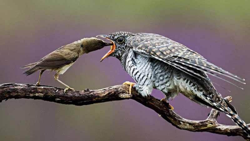 Ilustrasi burung