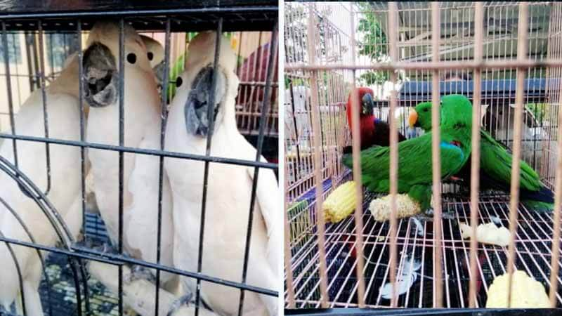 Sindikat Perdagangan Burung Dilindungi Diringkus di Batam