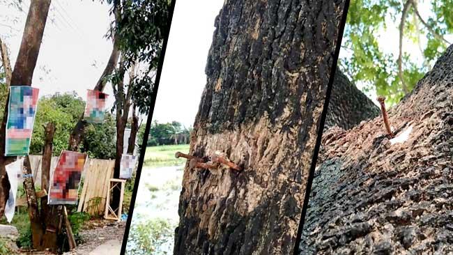 Harusnya Para Caleg Tahu, Ini Dampak Buruk Memaku Pohon