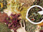 Ilustarsi tanaman obat yang telah kering