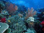 Terumbu karang Raja Ampat