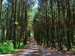 Ilustrasi hutan sosial