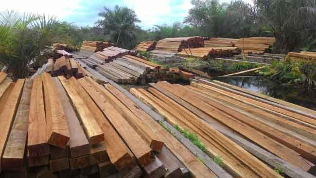 Temuan JPIK, Illegal Logging Semakin Marak di Kawasan Hutan