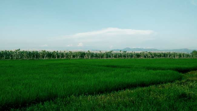 Perihal Permen LHK tentang Food Estate, WALHI: Membuka Kran Deforestasi Akut!