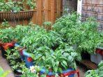 Sensasi Bahagia Berkebun di Rumah, Mulailah dengan Menanam 4 Jenis Sayuran Ini!