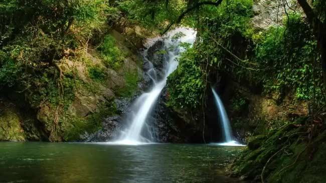 5 Destinasi Eksotik yang Dekat dengan Alam, dari Ikan Raksasa hingga Hutan Tertua di Dunia