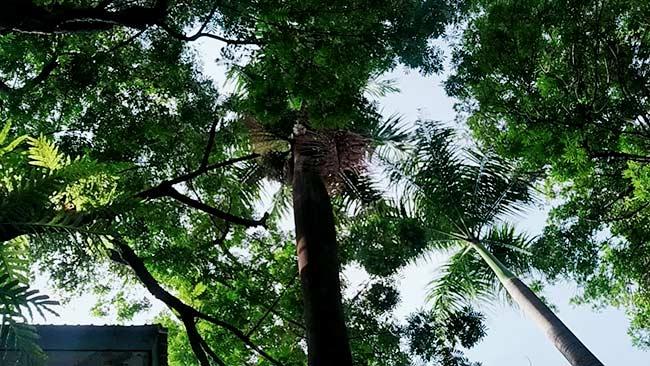 Ingin Tahu Hal Luar Biasa dari Pohon? Klik Ini!