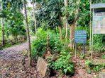Kearifan Lokal Suku Kajang dalam Melestarikan Hutan