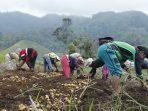 Rantai Pasok Pangan yang Rapuh Terbukti Memiskinkan Petani di Desa