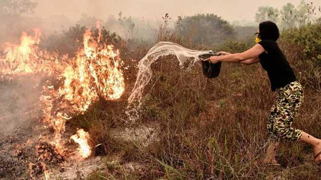 Manggala Agni Diharapkan Fasilitasi Masyarakat Agar Tak Bakar Hutan dan Lahan