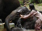 Memandikan gajah
