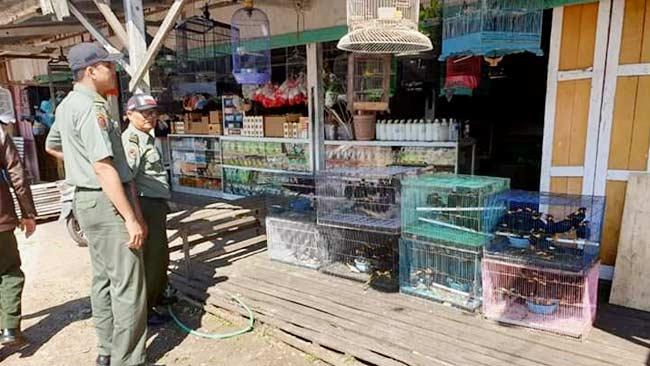 Balai Gakkum Kalimantan Ringkus Pedagang Burung Dilindungi di Katingan