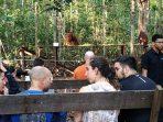 Orang Utan, Idola Wisatawan Mancanegara di Taman Nasional Tanjung Puting