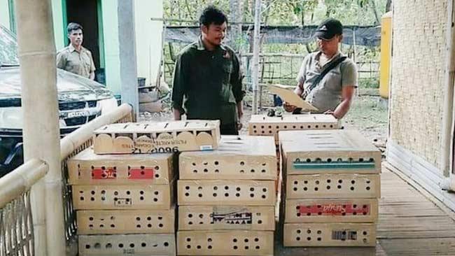 Polhut Gagalkan Penyelundupan Ratusan Ekor Burung Branjangan di Sumba Timur