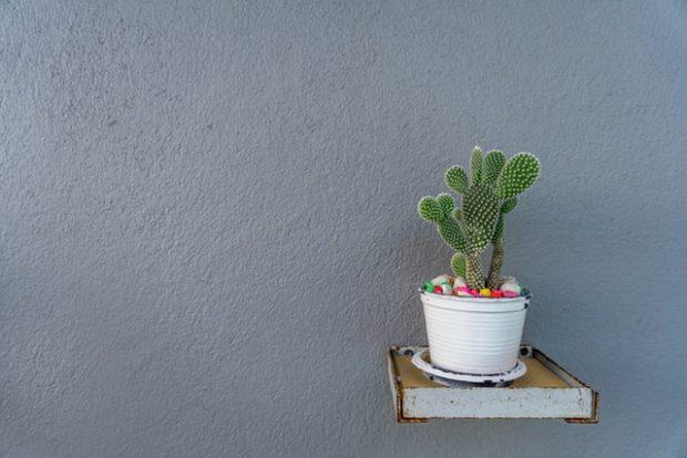 5 Tips Merawat Tanaman Kaktus dan Sukulen untuk Pemula, Klik Ini!