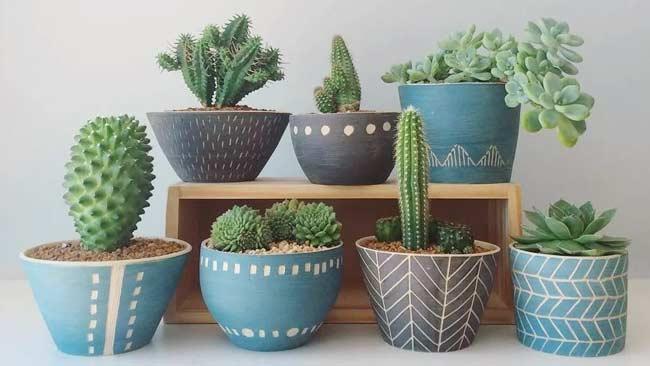 5 Tips Merawat Tanaman Kaktus Dan Sukulen Untuk Pemula Klik Ini Klik Hijau