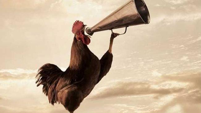 Kokoknya Dianggap Mengganggu, Seekor Ayam Jago Disidang di Prancis