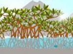 Puluhan Ribu Batang Pohon Mangrove Penuhi 12 Provinsi di Indonesia