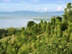 Taman Hutan Raya Nipa-Nipa Kendari dan Potensi Istimewa di Baliknya