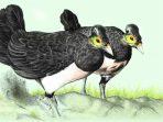 Agar Bertahan Hidup Burung Maleo Lintas Provinsi Cari Makan