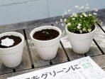 Ajaib! Koran Ini Bisa Jadi Tanaman di Jepang