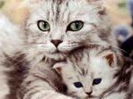 Akhir Kisah Abah Grandong, Pemakan Kucing Hidup-Hidup yang Menyebalkan