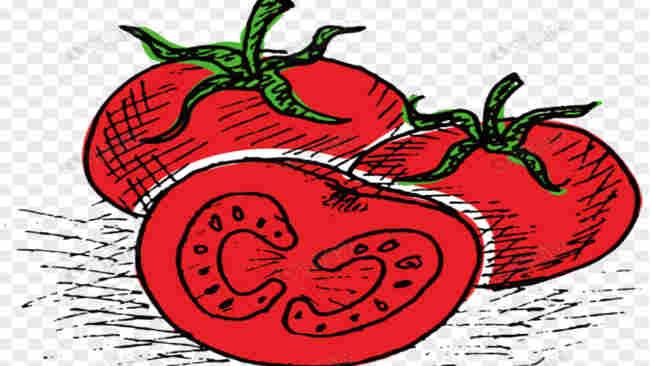 Benarkah Tomat Bisa Memperbesar Mr. P?