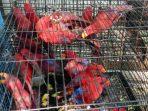 Gakkum LHK dan BBKSDA Sulsel Amankan 43 Ekor Satwa Dilindungi