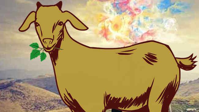 Intip Cara Sederhana Menghilangkan Bau Daging Kambing!