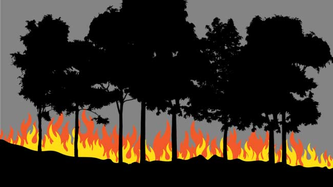 Setelah Berjibaku Lima Jam, Brigade Macaca Jinakkan Api di Bantimurung