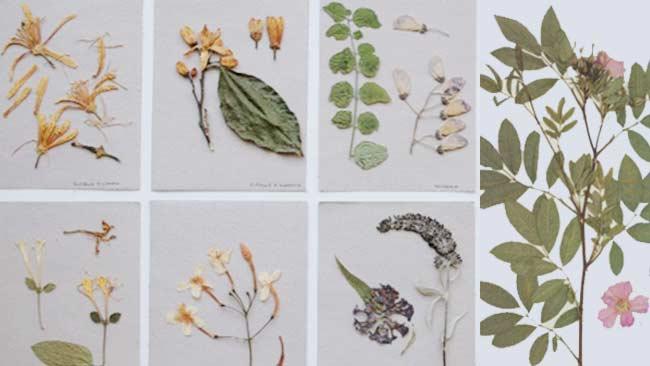 Tutorial Mengawetkan Tumbuhan sebagai Media Belajar, Klik Ini!
