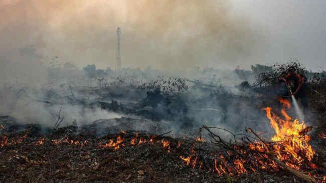 Yayasan Madani: Mitigasi dan Antisipasi Kebakaran Hutan Harus Diperkuat!
