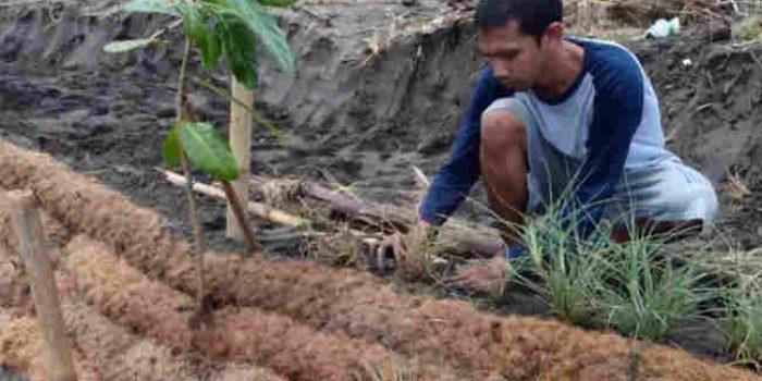 Ketika Sabut Kelapa Dimodifikasi Jadi Tanggul Laut Ramah Lingkungan