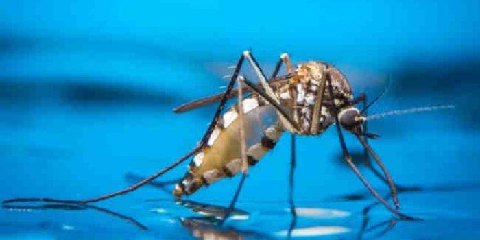 Nyamuk Jadi Ancaman Baru Bagi Lingkungan, Kok Bisa?