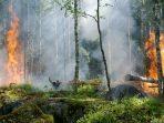 3 Penyebab Utama Kerusakan Hutan yang Penting Diketahui