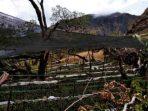 Lelaki Tua, Tristania, dan Jalan Terjal Reboisasi di Jannaq Loe