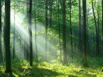 14 Fakta Seputar Konservasi Hutan yang Akan Membuat Anda Kagum