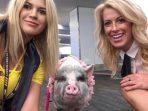 "Kenalkan Lilou, Babi Pertama yang Jadi ""Petugas"" di Bandara!"