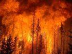 Fakta Miris Kebakaran Hutan di Seluruh Dunia Tahun 2019