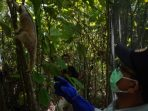 Cara Bijak Mengelola Hutan Desa untuk Lingkungan dan Ekonomi Berkelanjutan