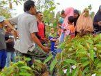 Puang Jama dan Bibit Pohon Durian Abu Bakar Ash-Shiddiq