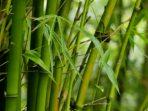 Rotan dan Bambu Sangat Penting untuk Dikembangkan di Indonesia