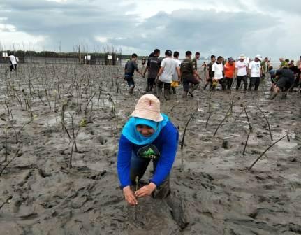 Tak Asal Tanam, Rehabilitasi Mangrove Memerlukan Strategi yang Tepat