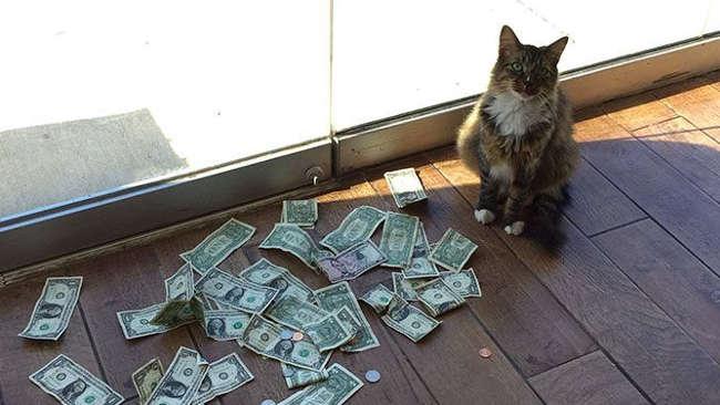 Patut Dipelihara Kucing Ini Mengancam Pemiliknya Jadi Kaya